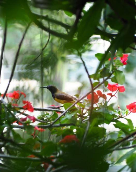 Ban công vườn có đàn chim bay đến
